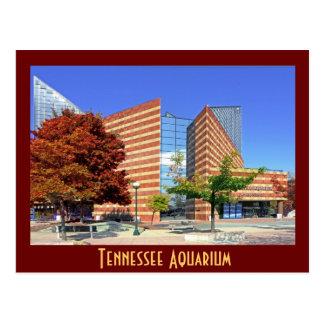 The Tennessee Aquarium - Chattanooga, TN. Postcard