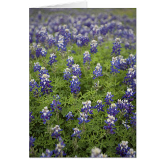 The Texas Bluebonnet Card