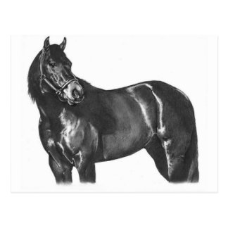 The Thoroughbred Postcard