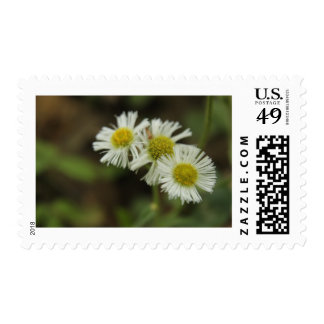 The Three Little Flowers Postage