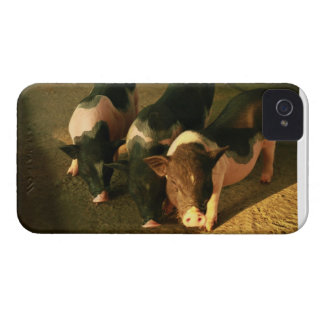 The Three Little Pigs Blackberry Cases