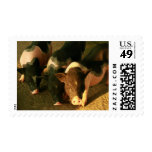 The Three Little Pigs Stamps