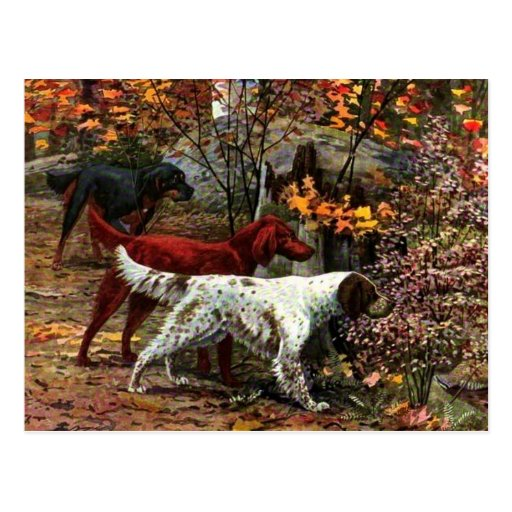The Three Setters Postcard