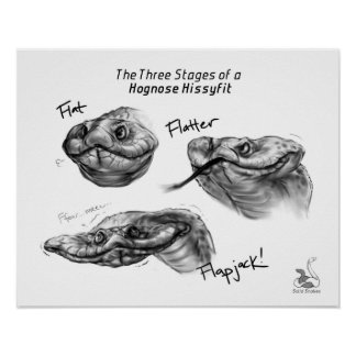"""The Three Stages of a Hognose Hissyfit"" Poster"