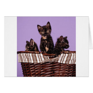 The Three Stooges Greeting Card