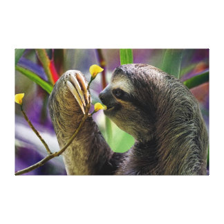 The Three-Toed Sloth Canvas Print