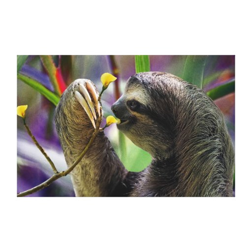 The Three-Toed Sloth Gallery Wrapped Canvas
