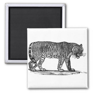 The Tiger 2 Inch Square Magnet
