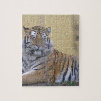 The Tiger Jigsaw Puzzle