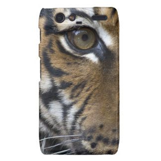 The Tiger s Eye Droid RAZR Case