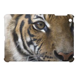 The Tiger's Eye iPad Mini Cover