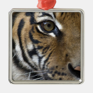 The Tiger's Eye Metal Ornament