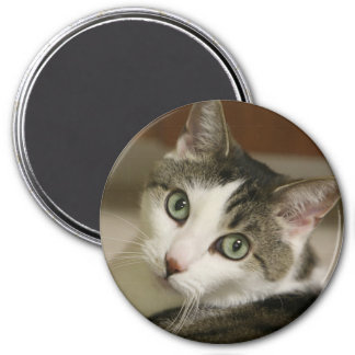 The Tiniest Tiger Button 3 Inch Round Magnet