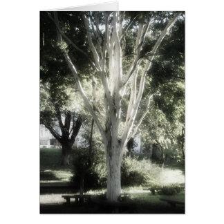 The tree  A árvore  L'arbre El árbol Greeting Card