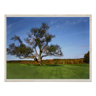 The Tree at Topsmead Poster