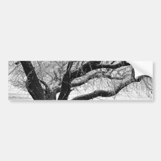 The tree covered with hoarfrost. bumper sticker