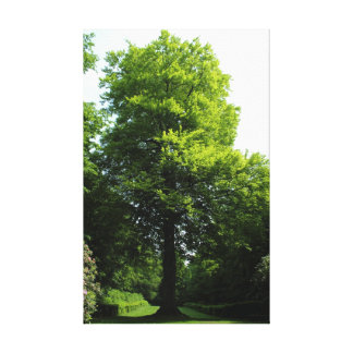 The Tree Gallery Wrap Canvas