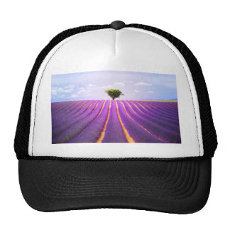 The tree in the lavender trucker hat