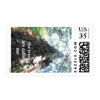the trees are calling me, forest camping postcard postage