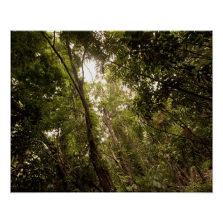 The tropical rainforest the Daintree River Print