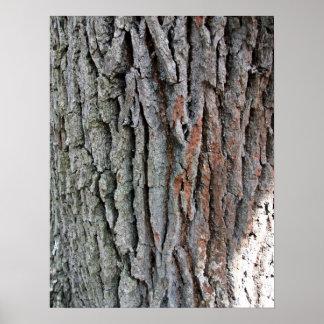The trunk of a live oak print
