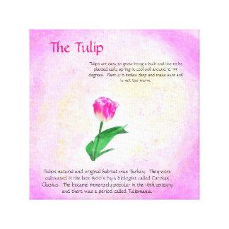 The Tulip Flower Canvas