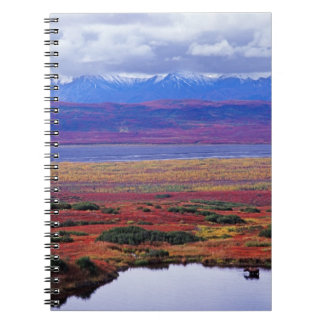 The tundra of Denali National Park in the late Notebook