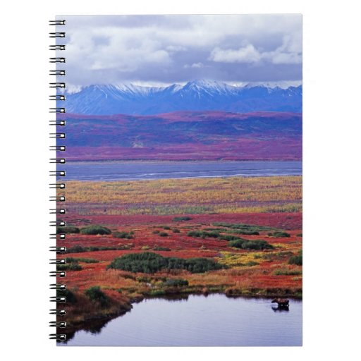 The tundra of Denali National Park in the late Spiral Notebook