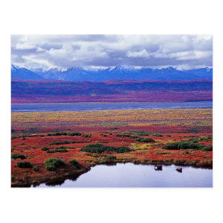 The tundra of Denali National Park in the late Postcard