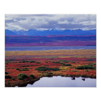 The tundra of Denali National Park in the late Poster