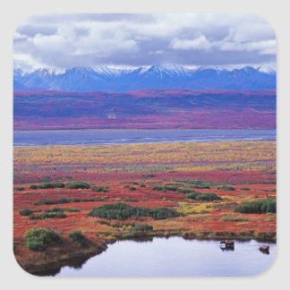 The tundra of Denali National Park in the late Square Sticker