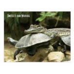 The Turtle and the Crocodile Post Card