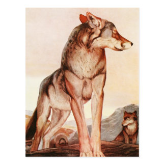 The Two Jungle Books: Akela, the Lone Wolf Postcard