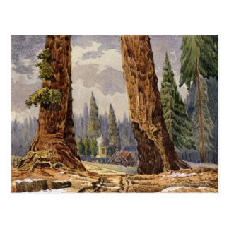 The Two Sentinels, at the Grove of Big Trees Postcard