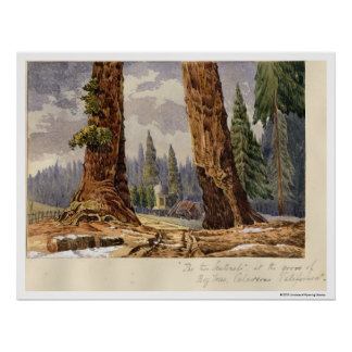 The Two Sentinels, at the Grove of Big Trees Poster
