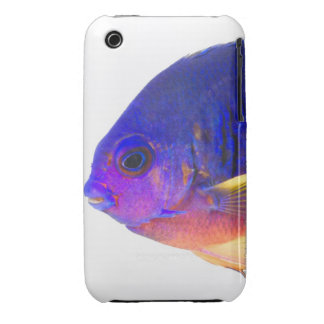 The two-spined angelfish iPhone 3 covers