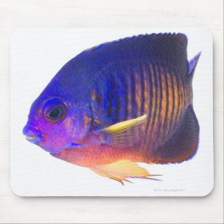 The two-spined angelfish mouse pad