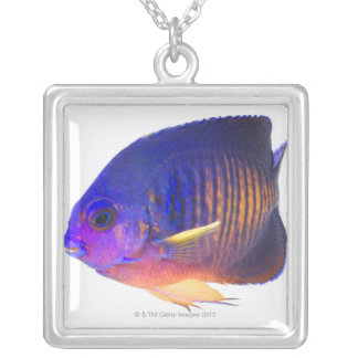 The two-spined angelfish silver plated necklace