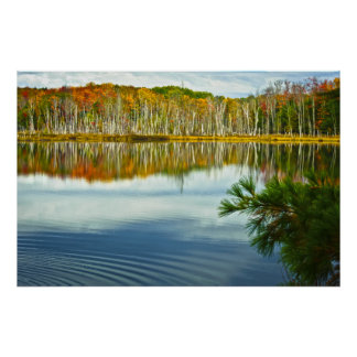 The U. P.: Autumn Birch Tree Reflections Poster