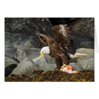 The Ultimate Bald Eagle Card