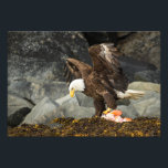 "The Ultimate Bald Eagle Photo Print<br><div class=""desc"">Decorated with an image of an American Bald Eagle (Haliaeetus leucocephalus) grasping the carcass of a Yelloweye Rockfish (Sebastes ruberrimus) with his talons on the rocky shoreline of Blackstone Bay in Alaska&#39;s Prince William Sound. By Ted Raynor</div>"