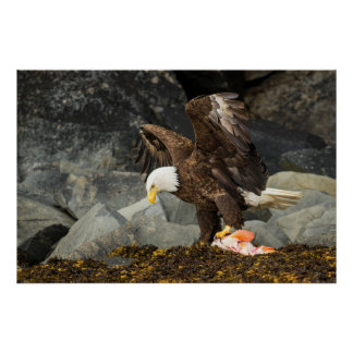 The Ultimate Bald Eagle Poster