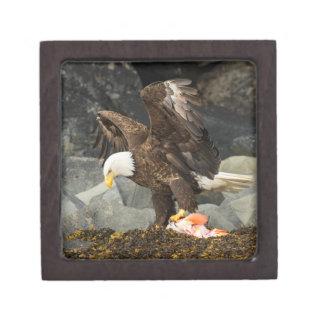 The Ultimate Bald Eagle Premium Trinket Boxes