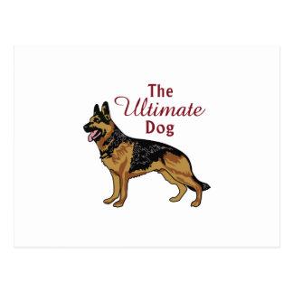 The Ultimate Dog Postcard