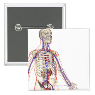 The Urinary System 2 2 Inch Square Button