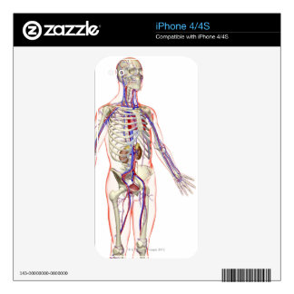 The Urinary System 2 iPhone 4S Skins