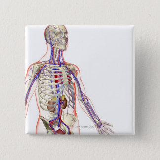 The Urinary System 2 Pinback Button