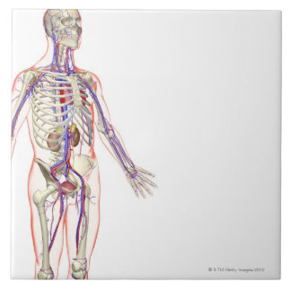 The Urinary System 2 Large Square Tile