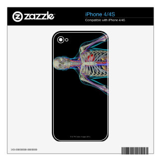 The Urinary System iPhone 4S Decal