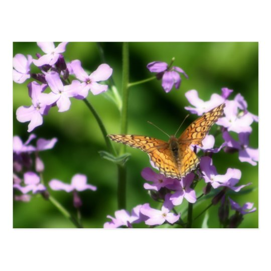The Variegated One Butterfly Photography Art Postcard